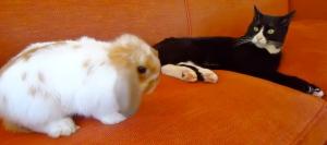 Bunny loves Zeus